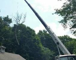 Photo #2: Mankus Tree Service. EXPERT TREE REMOVAL