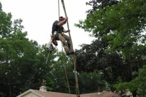 Photo #3: Mankus Tree Service. EXPERT TREE REMOVAL