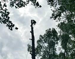 Photo #4: Mankus Tree Service. EXPERT TREE REMOVAL
