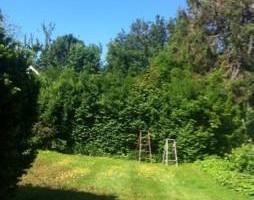 Photo #2: Jake's Landscaping