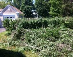 Photo #1: Jake's Landscaping