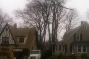 Photo #4: LOG DOGS TREE SERVICE