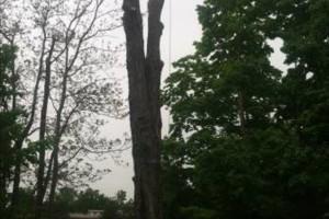 Photo #1: LOG DOGS TREE SERVICE