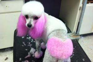 Photo #2: Dog Grooming Services