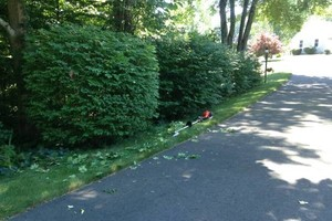 Photo #21: Still offering fall cleanup and other landscape services
