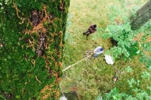 Photo #4: New Haven Tree Removal