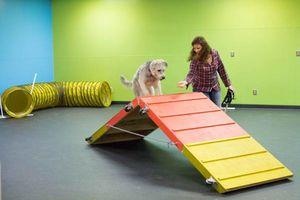 Photo #1: Puppy Basic & Agility Fun Classes