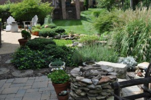 Photo #6: NEED TIDY-UP FOR YOUR YARD?