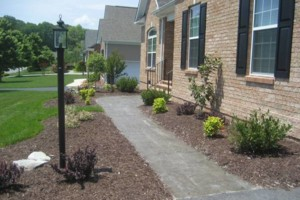 Photo #4: NEED TIDY-UP FOR YOUR YARD?