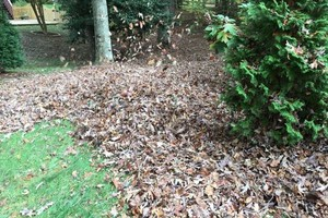 Photo #14: Leaf removal, landscaping service and more