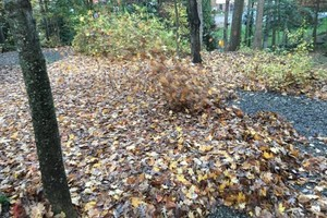 Photo #12: Leaf removal, landscaping service and more