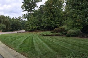 Photo #5: Leaf removal, landscaping service and more
