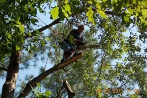 Photo #21: CERTIFIED EXPERT TREE SERVICE, 65 FT BUCKET TRUCK & CLIMBING SERVICE