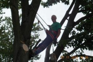 Photo #20: CERTIFIED EXPERT TREE SERVICE, 65 FT BUCKET TRUCK & CLIMBING SERVICE