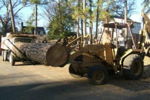 Photo #17: CERTIFIED EXPERT TREE SERVICE, 65 FT BUCKET TRUCK & CLIMBING SERVICE