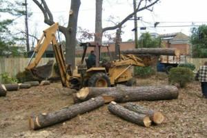 Photo #16: CERTIFIED EXPERT TREE SERVICE, 65 FT BUCKET TRUCK & CLIMBING SERVICE