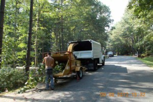 Photo #15: CERTIFIED EXPERT TREE SERVICE, 65 FT BUCKET TRUCK & CLIMBING SERVICE
