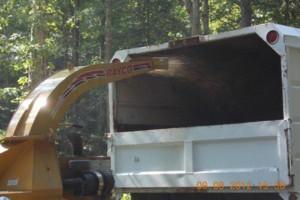 Photo #14: CERTIFIED EXPERT TREE SERVICE, 65 FT BUCKET TRUCK & CLIMBING SERVICE