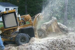 Photo #13: CERTIFIED EXPERT TREE SERVICE, 65 FT BUCKET TRUCK & CLIMBING SERVICE