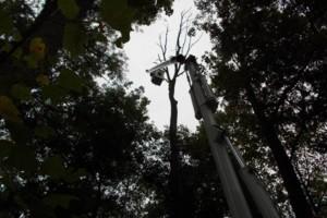Photo #10: CERTIFIED EXPERT TREE SERVICE, 65 FT BUCKET TRUCK & CLIMBING SERVICE