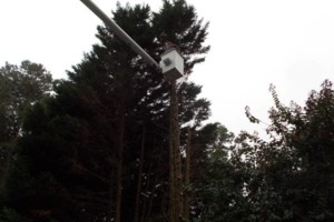 Photo #9: CERTIFIED EXPERT TREE SERVICE, 65 FT BUCKET TRUCK & CLIMBING SERVICE