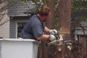Photo #8: CERTIFIED EXPERT TREE SERVICE, 65 FT BUCKET TRUCK & CLIMBING SERVICE