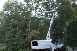 Photo #3: CERTIFIED EXPERT TREE SERVICE, 65 FT BUCKET TRUCK & CLIMBING SERVICE
