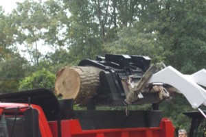 Photo #1: CERTIFIED EXPERT TREE SERVICE, 65 FT BUCKET TRUCK & CLIMBING SERVICE