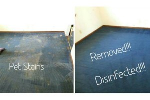 Photo #2: $60 3 ROOMS! EXPRESS CARPET CLEANING