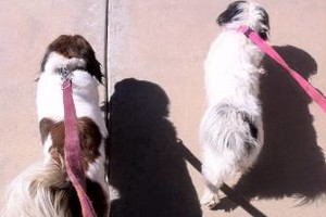 Photo #4: DOG BOARDING/DAYCARE (Good Reviews)