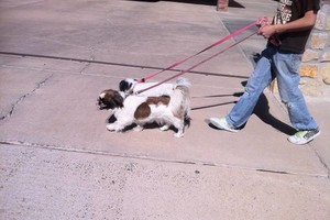 Photo #3: DOG BOARDING/DAYCARE (Good Reviews)
