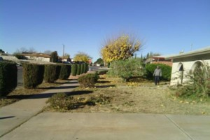 Photo #4: LANDSCAPING And Tree removal