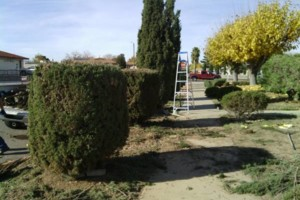Photo #7: LANDSCAPING And Tree removal