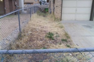 Photo #14: LANDSCAPING And Tree removal