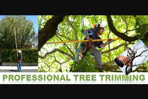 Photo #11: Tree Triming, Tree Removal exp.