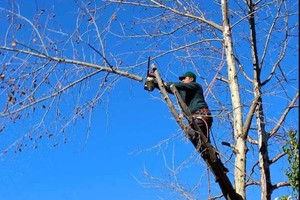 Photo #9: Tree Triming, Tree Removal exp.