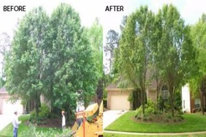 Photo #7: Tree Triming, Tree Removal exp.