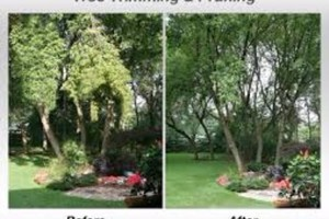 Photo #4: Tree Triming, Tree Removal exp.