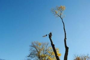 Photo #1: K.T.S TREE SERVICE - STUMP GRINDING - BUCKET SERVICE/CLIMBING
