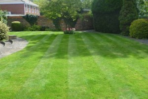 Photo #6: FREE LAWN CARE QUOTE FOR 2016!... Yard Butler