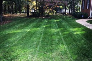 Photo #3: FREE LAWN CARE QUOTE FOR 2016!... Yard Butler