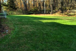 Photo #1: FREE LAWN CARE QUOTE FOR 2016!... Yard Butler