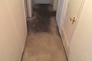 Photo #1: Professional Carpet/Upholstery cleaning 3 rooms 60dlls
