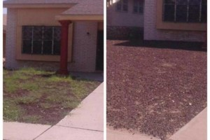 Photo #11: YARD CLEANING AND MAINTENANCE
