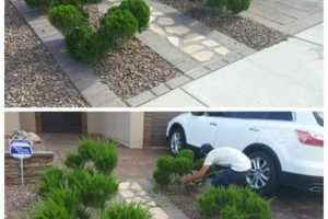 Photo #10: YARD CLEANING AND MAINTENANCE