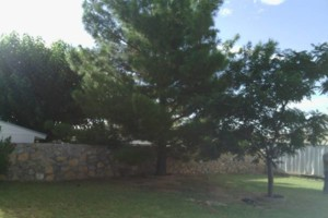 Photo #1: TREE REMOVAL OR TRIMMING(FREE ESTIMATES)