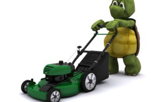 Photo #1: TURTLE'S LAWN CARE / IRRIGATION SHUT DOWN
