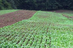 Photo #11: Food Plots - I'm Your Huckleberry