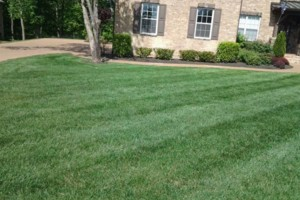 Photo #8: Brooks Lawn Care - Free Quotes - Quality and Affordable