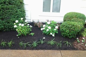 Photo #4: Brooks Lawn Care - Free Quotes - Quality and Affordable